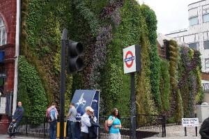 Green Wall at Edgware Road