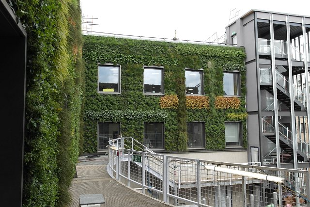 Green wall being installed at MTV Camden