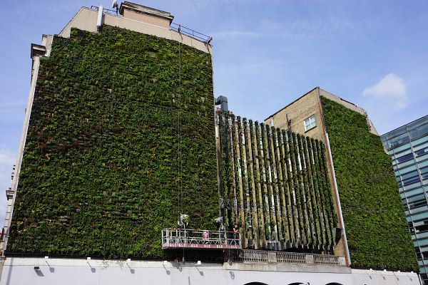Rubens Hotel greenwall by Gary Grant and treebox