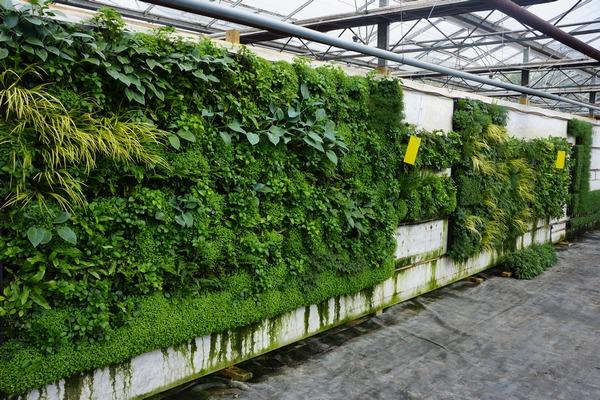 RNIB_Garden_Walls_Chelsea_Vertology