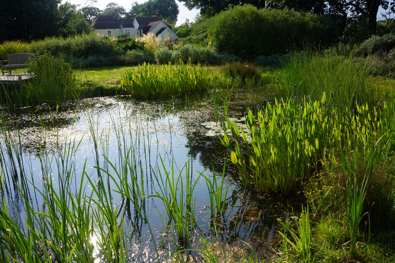 A Naturalistic pond with simulated wetlands and planting