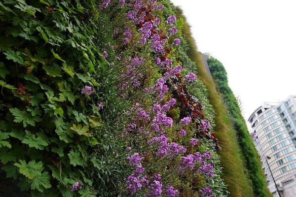 A Living wall designed by Mark Laurence