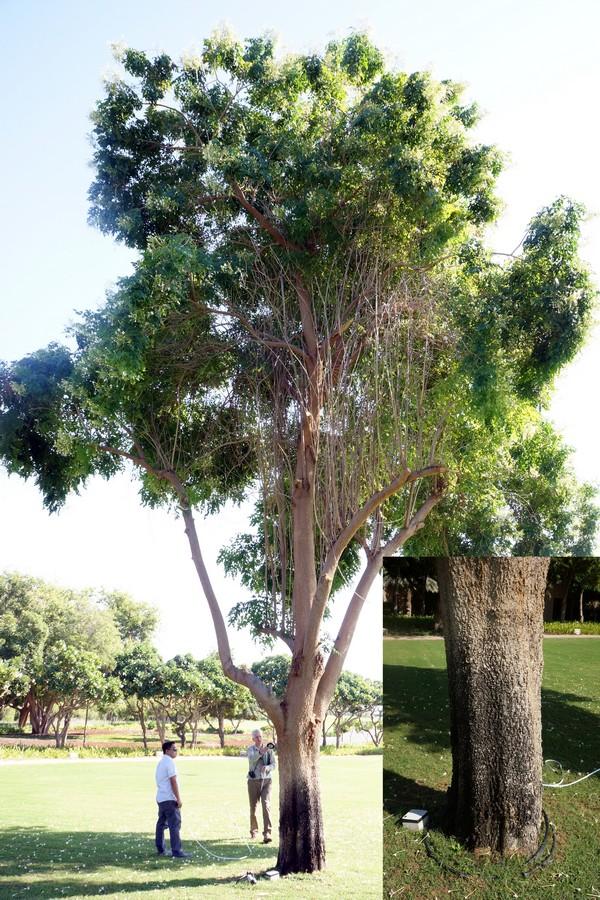 Tree sprinkler damage