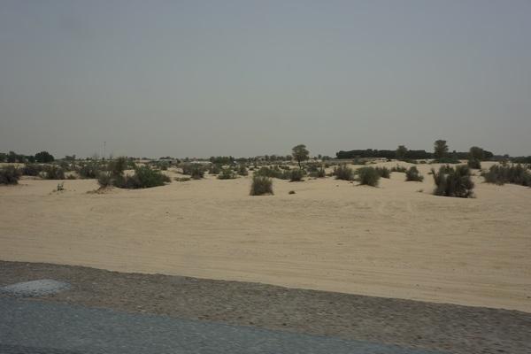 Desert Archetype