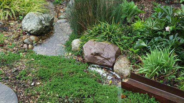 A rain garden which captures roof-water and allows it to infiltrate the ground