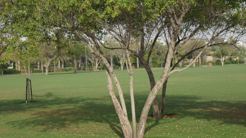Trees in grass lose most of their microclimate