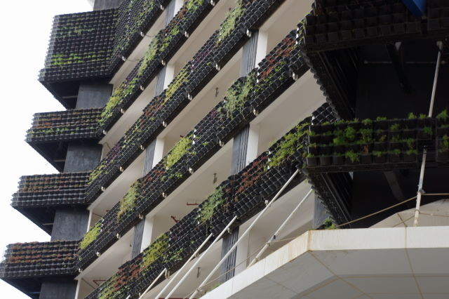 This is a brand-new wall on a new hotel on the Sheikh Zayed Road. Plant are looking very poor already...