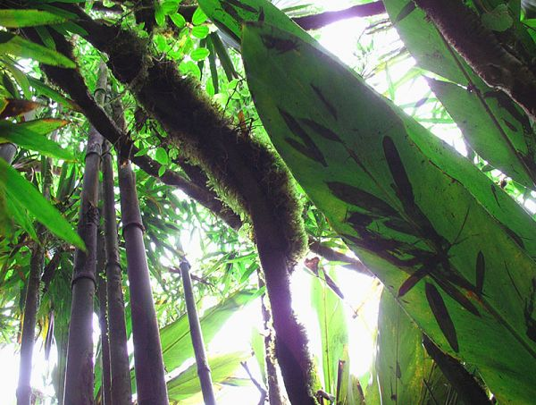Non-native bamboo and moss create homes for native ferns