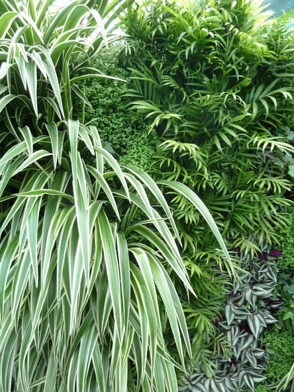 """""""inddor"""" plants on a green wall"""