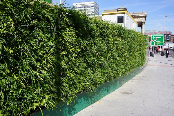 The outdoor green wall on hoarding at Elephant & Castle