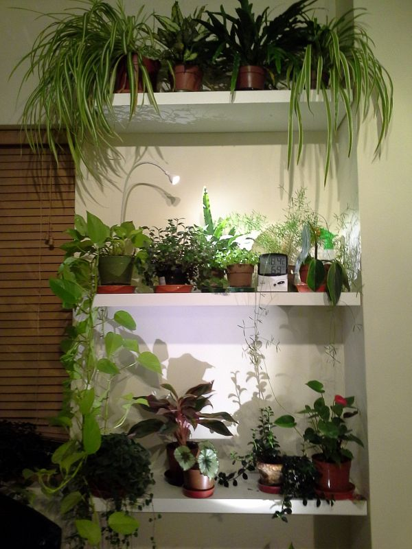 Plant shelve in my office