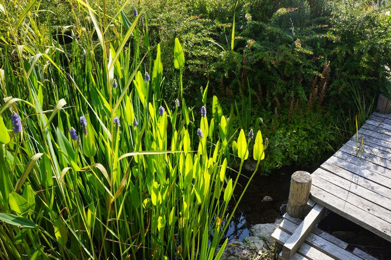 Pond bio-filters clean the water, naturally