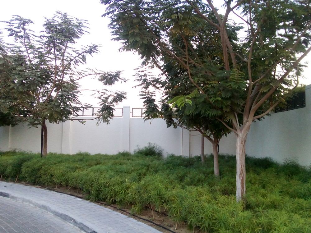 Formative tree care in the UAE