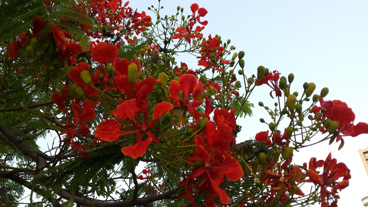 Tree consultancy in the UAE and GCC countries