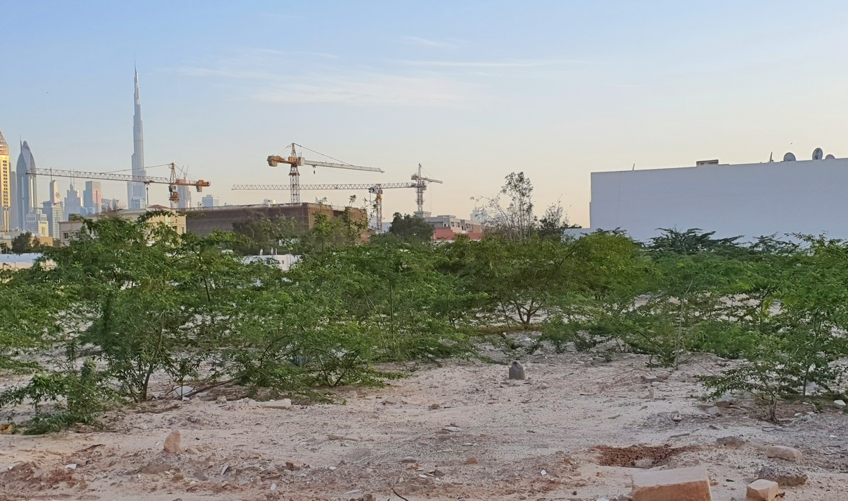 Natural regeneration on a brownfield site Dubai