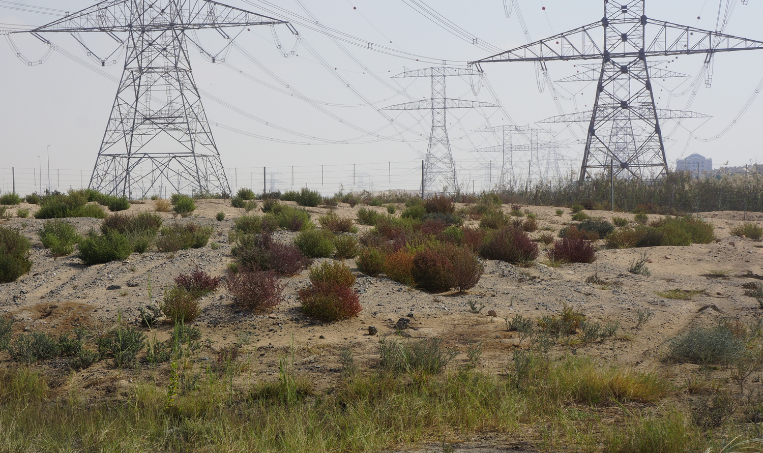 Creating non-irrigated climate-adapted landscapes in the Middle East