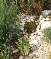 a stream garden